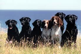 Hundar