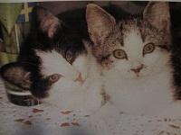Felix och Curry som kattungar