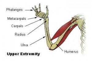 Illu_upper_extremity