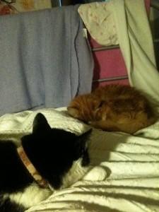 Mina sängkompisar