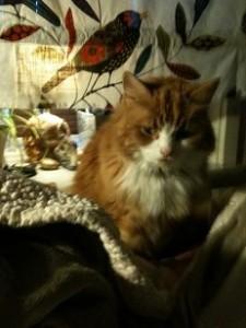 Wilma sängkompis