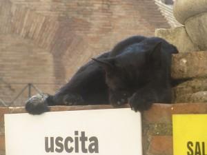 Katt vid Colloseum