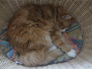 Wilma i korg sover