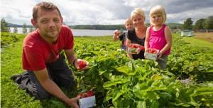 Eklogiska jordgubbar