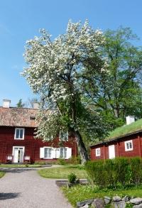 Linnes Hammarby
