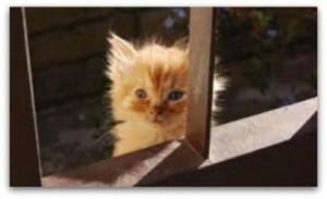 Övergiven kattunge - Djurens parti