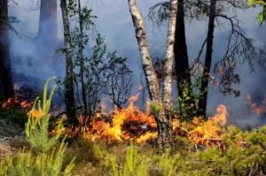 Bränder i skog och mark