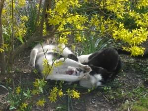 Kattslagsmål