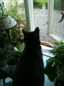 Wilma och Felix tar fönstervägen