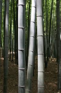 Bambu från Japan
