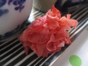 Döende hibiskus