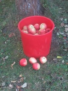 Hink och äpplen