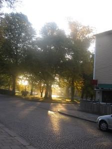 Stureparken 29 sept 14