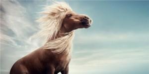 Winnie världens minsta häst