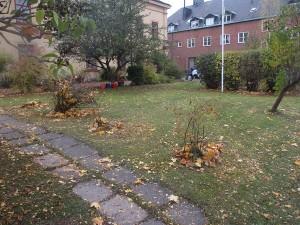 Räfsat och kliptt 16 okt 2014