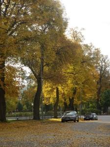 Stureparken 6 okt 2014