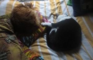 Wilma och Felix sover ihop