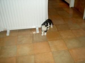 Felix som liten kattunge