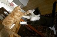 """Wilma ger Felix en """"rak höger""""...Inte snällt mot så snäll kusin"""