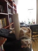 Wilma kör poledance