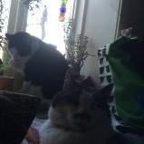 Siesta med Felix och Curry
