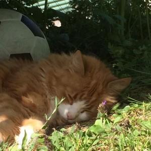 Wilma trött av värmen