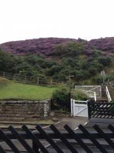 Goathland with wonderful heather sept 2015