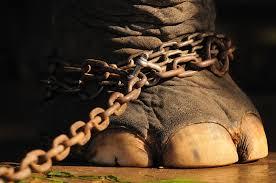 Elefant kedjad