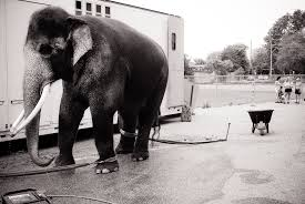 Elefant utanför husvagn