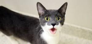 Katt vrålar