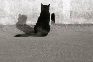 Katten och tålamodet