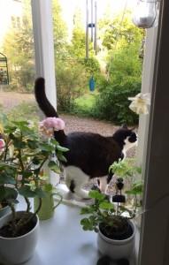 IMG_3827 Felix i fönstret