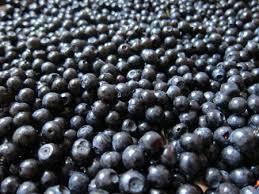 Massor av blåbär