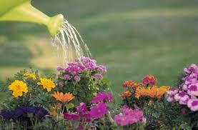 vattna-dina-blommor
