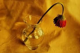 vissen-rod-blomma